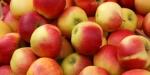 Sprzedam EKO jabłka z certyfikatem