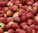 Kupię jabłka sortowane w ilościach całosamochodowych