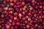 Kupię jabłka na przecier Ilości całosamochodowe Gotówka