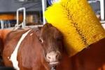 Dobrostan i ubój zwierząt- najlepsze szkolenia
