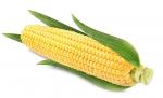 Sprzedam dużą ilość kukurydzy cukrowej super słodkiej.