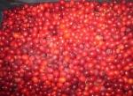 Owoce derenia jadalnego Jabłonna Majątek
