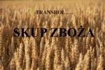 Kupię kukurydzę suchą - odbiór naszym transportem