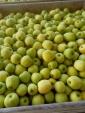 Sprzedam jabłka- Golden delicious